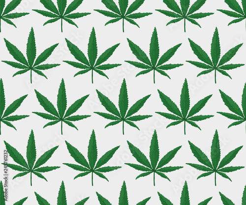 Photo Cannabis Leaf Pattern. Endless Vector