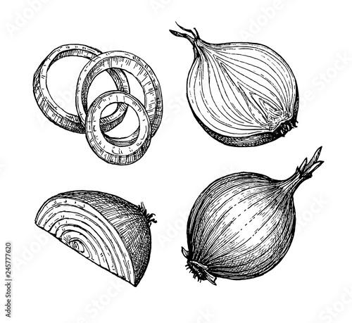 Fotografia Ink sketch of onion.