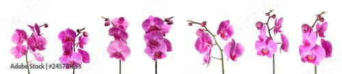 Photo Set of beautiful purple orchid phalaenopsis flowers on white background