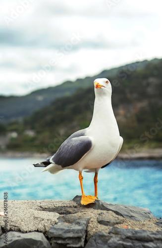 Canvas Print seagull in Portovenere