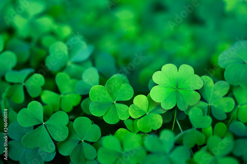 Cuadros en Lienzo Lucky Irish Four Leaf Clover in the Field for St. Patricks Day