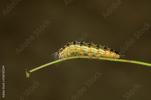 Image of Hairy caterpillar on tree branch on natural background. Insect. Worm. Animal.