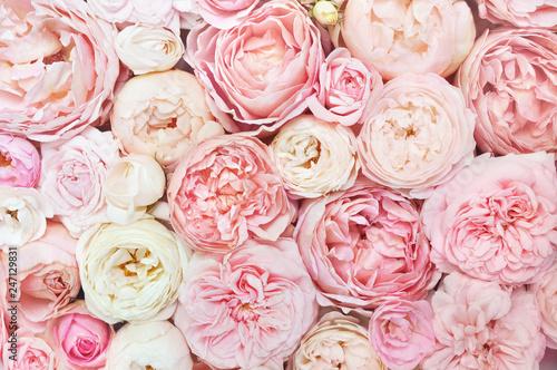 Lato kwitnie delikatnej róży kwitnienie kwitnie świątecznego tło, pastelowego i miękkiego bukieta kwiecistą kartę, selekcyjna ostrość, tonująca