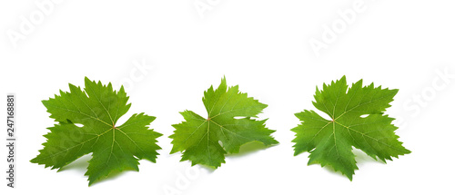Fotografia vine leaves