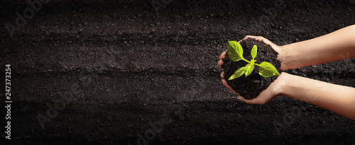 Canvas-taulu Female Hands Planting Young Plants. Garden Concept