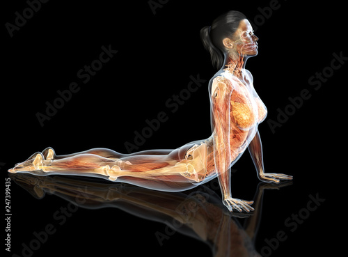 Slika na platnu Internal organs of a woman with joints, skeleton and muscles, 3D medically illus