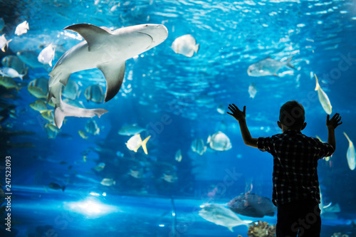 Fotografija Silhouette of a boy looking at fish in the aquarium.