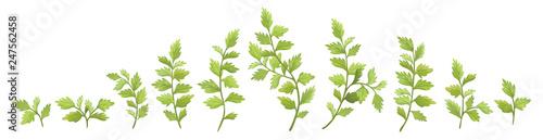 Fotografie, Obraz Vector designer elements set collection green branch with leaves