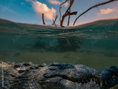 Foto Alligator Saltwater crocodile hiding under water line, dry tree in sea water with sunset clouds on background, underwater shot