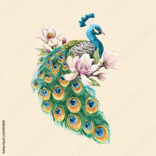 Fotografia Watercolor peacock vector illustration