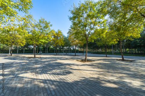Obraz na płótnie beautiful park at a sunny day, shanghai, china.