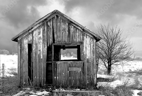 Tablou Canvas weathered shack and tree