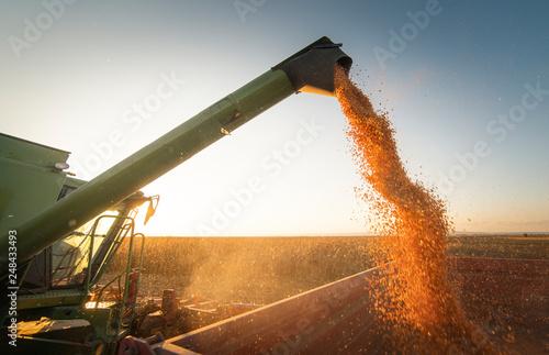 Photo Pouring corn grain into tractor trailer