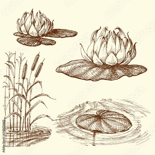 Carta da parati Water lily and water plants set