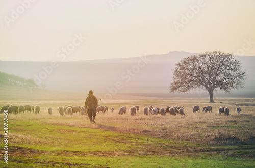 Shepherd and herd of sheep Fototapeta