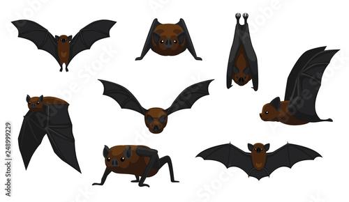 Billede på lærred Vampire Bat Flying Cartoon Vector Illustration