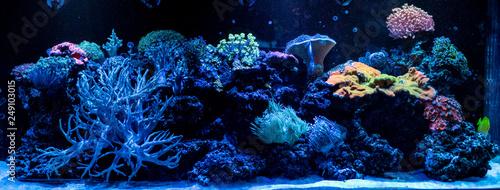 Foto hard coral macro in aquarium