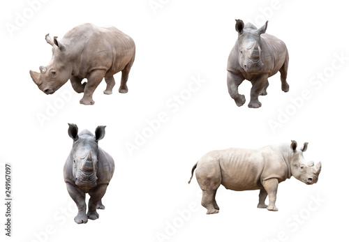 Photo White rhino