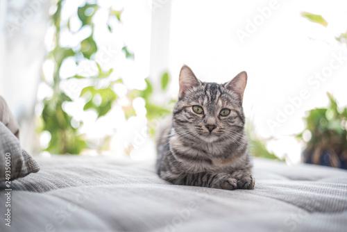 Photo Liegende Katze