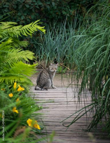 Stampa su Tela Cat looking at you resting