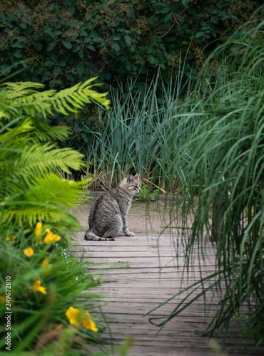 Carta da parati Cat on florring looking at bushes