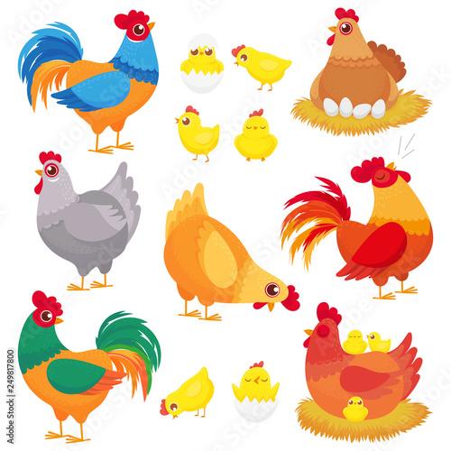 Carta da parati Cute domestic chicken