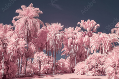 Photo Palm Trees in Pastel Infrared Color