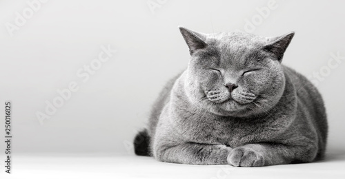 Sleepy smiling cat laying on the floor.