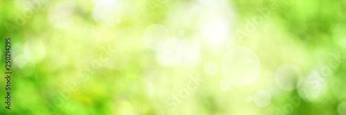 Tela Abstract green spring background
