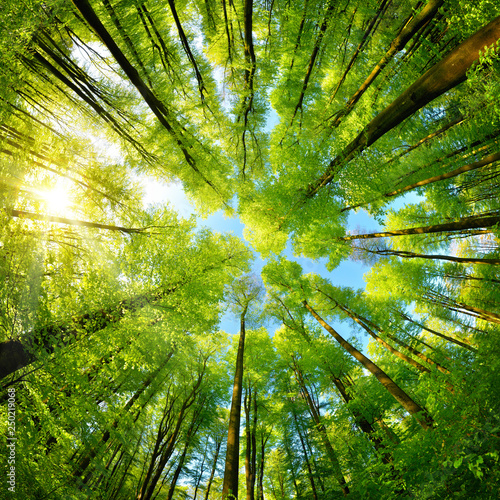 Photo Spheric panorama in a forest, magnificent upwards view to the treetops