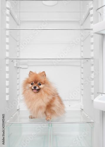 fluffy pomeranian dog sitting in an empty fridge