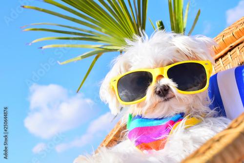 Fotografie, Obraz funny dog with sunglasses