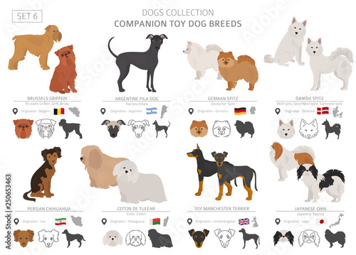 Photo Companion and miniature toy dogs collection isolated on white