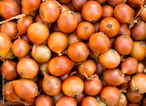 Stampa su Tela Fresh raw bulbs onion ( Allium cepa ). Texture, background