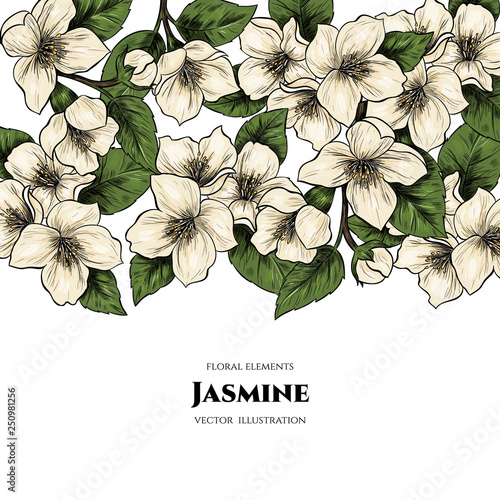 Photo Vector frame with jasmine flowers. Hand drawn. Vintage style