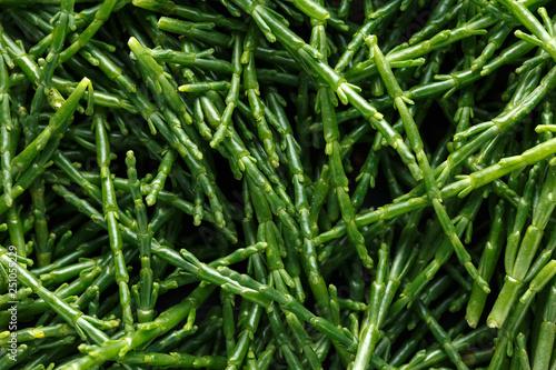 Photo Fresh green samphire. close up, background, texture.