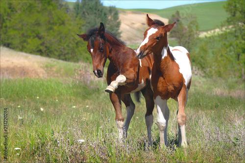 Fototapeta Sassy Foals