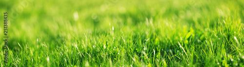 Obraz na plátně Fresh green grass background