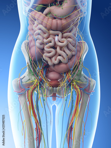 Photo 3d rendered illustration of a females abdominal anatomy