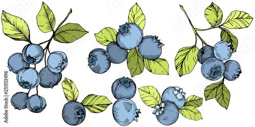 Fotografie, Obraz Vector Blueberry green and blue engraved ink art