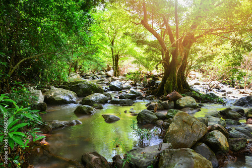 Fotografia River stream landscape waterfall green forest nature jungle on the mountain with