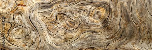 Burlwood Stump
