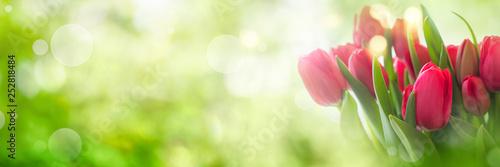 Fototapeta premium Tulipany na wiosny tle