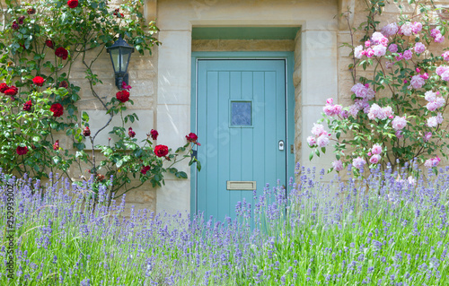 Bright blue wooden doors in an old traditional English lime stone cottage surrounded by climbing red and pink roses in bloom, with flowering purple lavender in front garden .