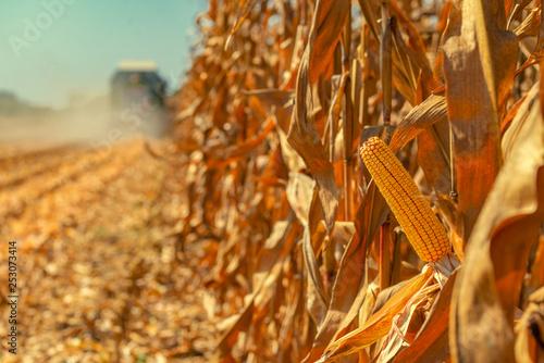 Foto Combine harvester is harvesting corn crops