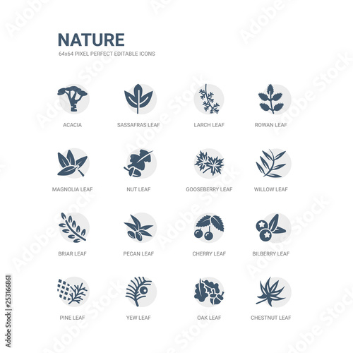 Obraz na płótnie simple set of icons such as chestnut leaf, oak leaf, yew leaf, pine bilberry cherry pecan briar willow gooseberry related nature icons collection