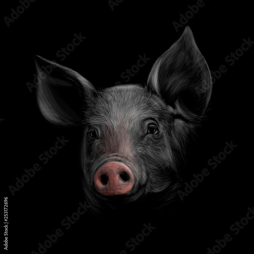 Wallpaper Mural Portrait of a pig head on a black background