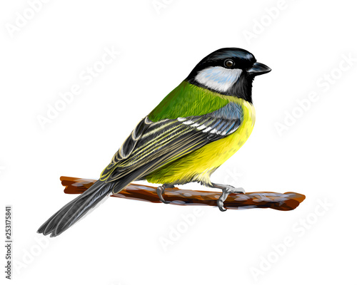 Obraz na plátně Portrait of a tit bird sitting on a branch on white background, hand drawn sketc