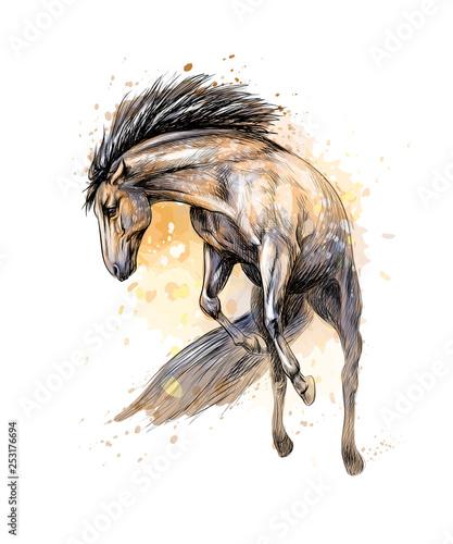 Fotografiet Horse run gallop from splash of watercolors. Hand drawn sketch