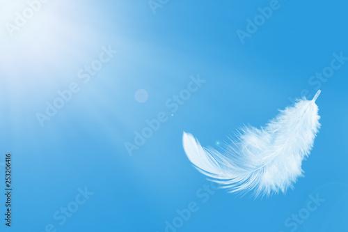 Carta da parati Single white feather float in the air.